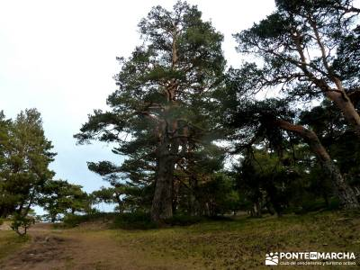 Siete Picos:Senda Herreros,Camino Schmid(Schmidt); senderismo sierra de madrid; excursion madrid;tre